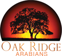 Oak Ridge Arabians
